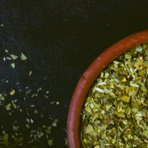 Global-yerba-mate-blog